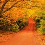 カナダで楽しむ紅葉。メープル街道以外で紅葉は見れるか?