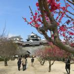 子連れで行く、四国3泊4日旅行 その2 東予港から松山、宇和島、そして、松丸へ