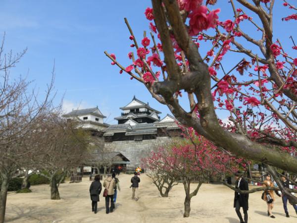 立ち寄った松山城では梅が咲き始めていました。