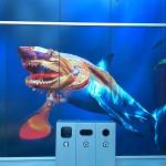 バンクーバー水族館、特別展示「シーモンスター」を見てきました!