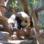 サンディエゴ旅行記9 サンディエゴ動物園