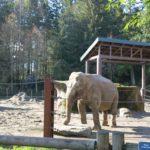 タコマ旅行記1 ポイント・ディファイアンス動物園
