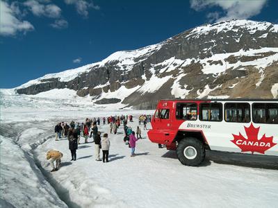 コロンビア大氷原観光、オプショナルツアーの選び方。カナディアンロッキーのコロンビア大氷原に自力で行けるのか?
