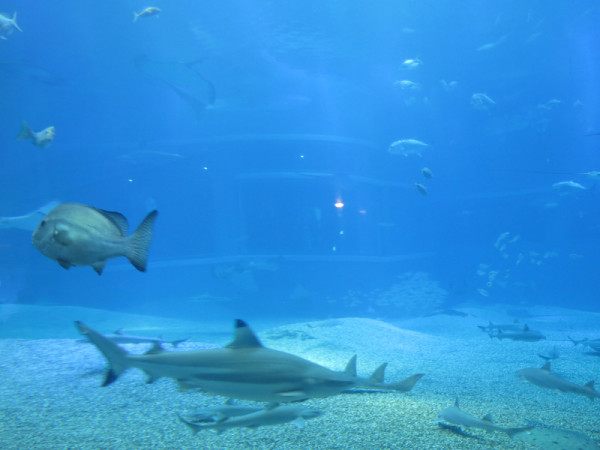 The bottom of whale shark tank