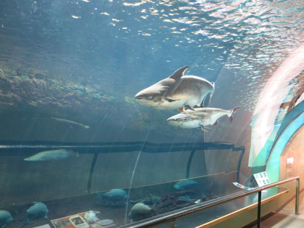 This aquarium has fish in Amazon river too.