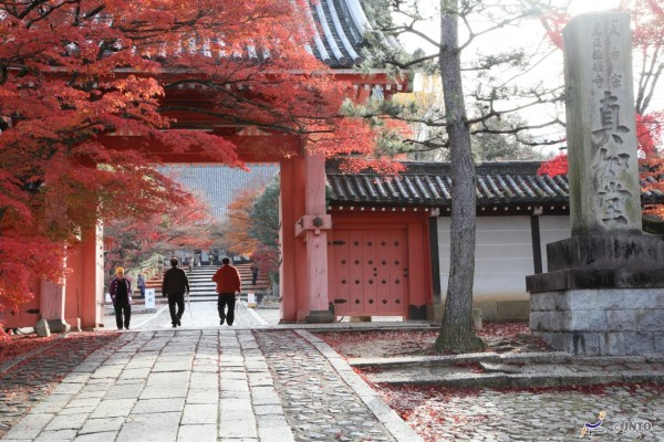 Shinsho-Gokuraku-ji temple in Kyoto. This temple is as known as Shinnyodo and it is getting popular to see fall foliage lately. (C) Yasufumi Nishi / JNTO