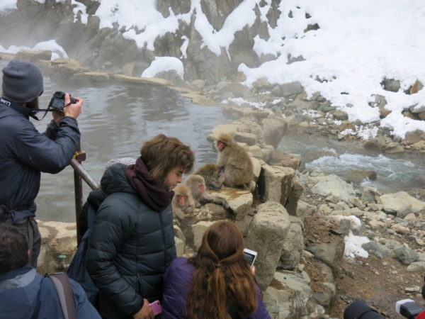 Monkeys enjoy  natural hot springs at Snow Monkey Park.