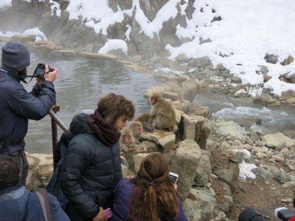 Monkeys enjoy  natural hot springs at Snow Monkey Park.