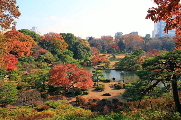 The scene of late fall in Rikugien Gardens (C) 京浜にけ - Bunkyo Rikugien Panoramic View In Late Autumn 1.JPG
