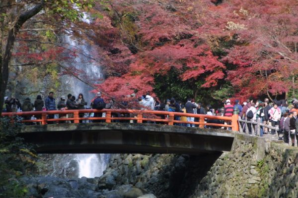 Minoo is one of most popular spots in Kansai area. (C) imi5 (大阪箕面の紅葉  Uploaded by Japan Maik) [CC BY-SA 2.0 ], via Wikimedia Commons