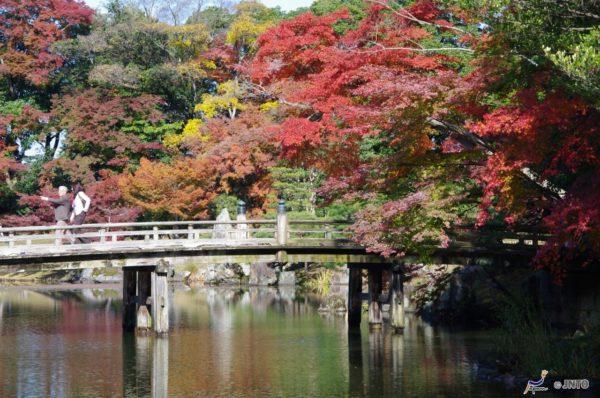 Genkyuen garden is traditional Japanese garden beside Hikone castle. (C) Yasufumi Nishi / JNTO